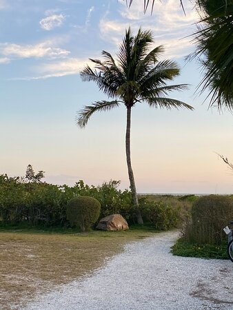 Palm tree at path to beach