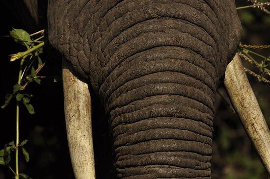 Tarangire National Park, Tanzania: Matriarch
