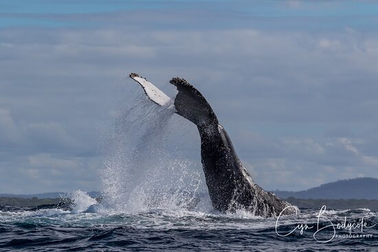 Great day out, well worth the trip - Picture of Whale Watching Yamba - Tripadvisor