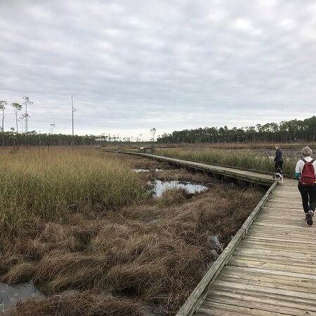 Big Branch Marsh National Wildlife Refuge - 1st Quarter mile of boardwalk through the marsh view three 01 02 21