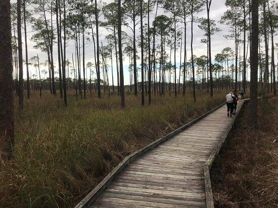 Lacombe, LA: Big Branch Marsh National Wildlife Refuge - 1st Quarter mile of boardwalk through the marsh view two 01 02 21