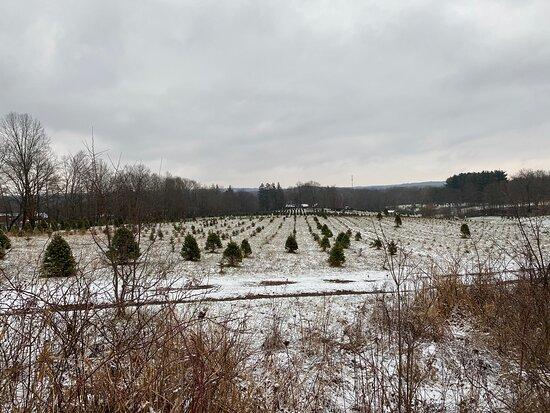 Tree Farm Trail
