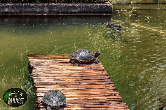 Jardim Botanico: Turtles sunning on a small dock in the pond in the front of the botanical gardens.