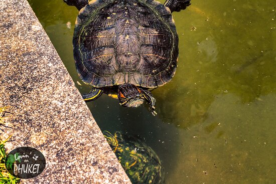 Jardim Botanico: Turtles in the pond in the front of the botanical gardens.