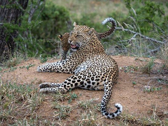 Mala Mala Private Game Reserve 사진