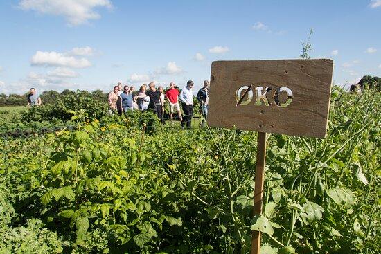 Farm to Fork / autentiske økooplevelser