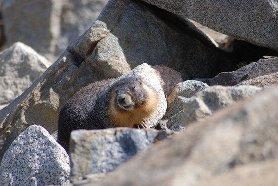 Yosemite National Park, CA: Souvenirs de mes Voyages --- USA -- Californie -- En randonnée au détour d'un chemin ..dame Marmotte 21.01.04