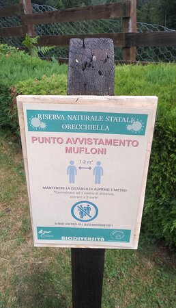 Avvistamento mufloni