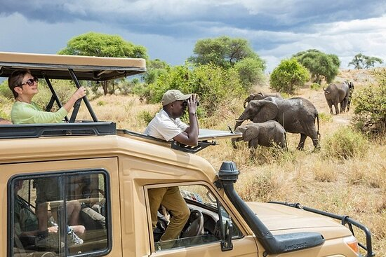 Fair Travel Safaris
