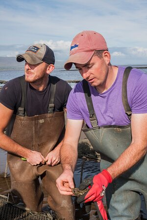 Private Oyster Tours in the Wild Atlantic Way: Oyster Tour