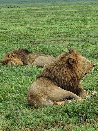 Ngorongoro Conservation Area Photo