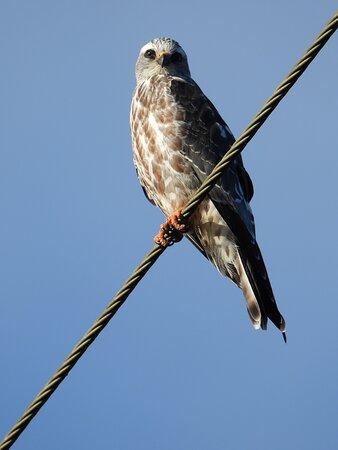 #BIRDS #HIKING