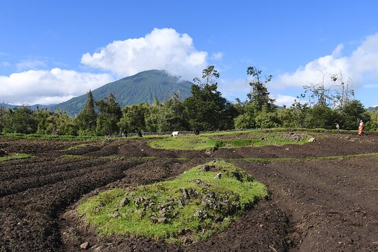 From well tended garden to the dense bamboo brushwood at volcanoe's mountainside