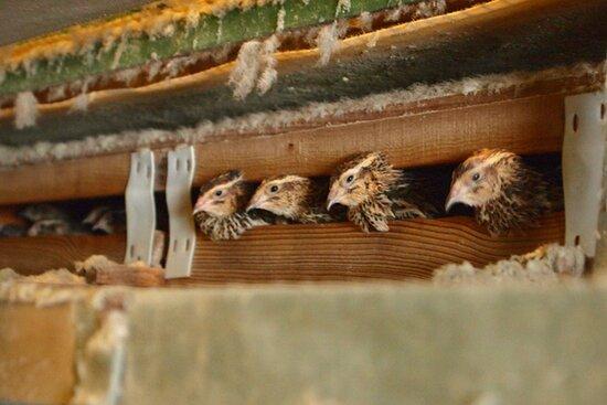 養鶏場内部_2 / Inside Poultry Farm_2