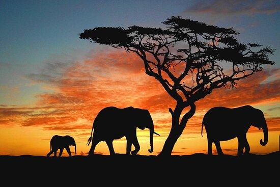 Mbugani Safaris