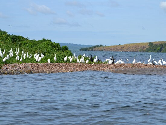 Rubondo Island was gazetted officially as National Park in 1977. It is an important breeding ground for both migratory bird and fish species especially Tilapia.