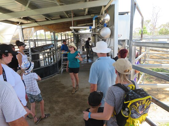 Camel Farm Experience - Tour & Taste: The milking shed.