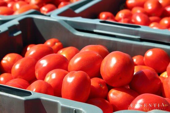 I nostri pomodori