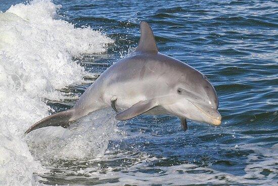 Noosa Oceanrider Scenic Dolphin Safari
