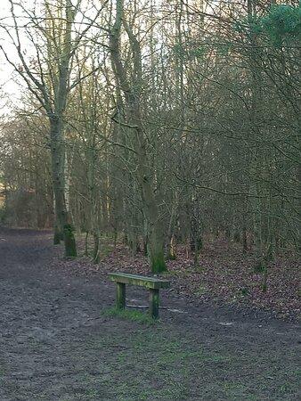 Views around Orchid Wood