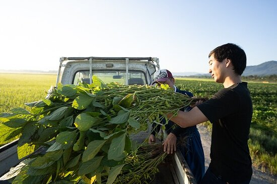 Farmers Homestay in Yamagata