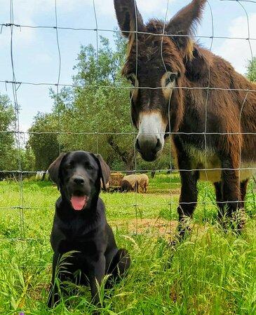 As nossas mascotes:  Coookie e  Zurra