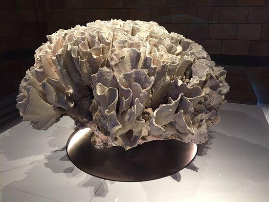 Colección del Museo de Historia Natural.