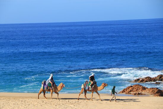 Camel Ride Adventure in Cabo: The scenery was spectacular.