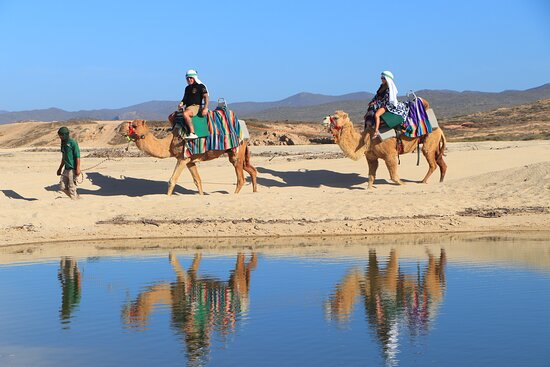 Camel Ride Adventure in Cabo: This was really cool.