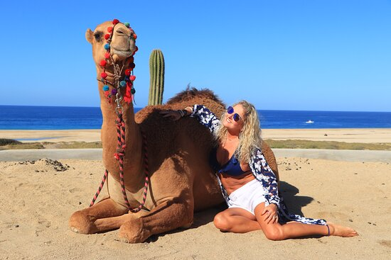 Camel Ride Adventure in Cabo: Hangin' out with the camel.