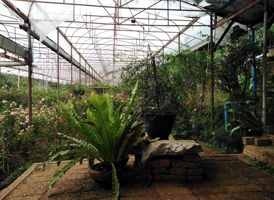 สวนกุหลาบห้วยผักไผ่ ศูนย์พัฒนาโครงการหลวงทุ่งเริง อ.สะเมิง จ.เชียงใหม่