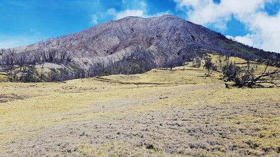 El contraste del potrero verde, con el bosque quemado  y el volcán sacando sus gases.