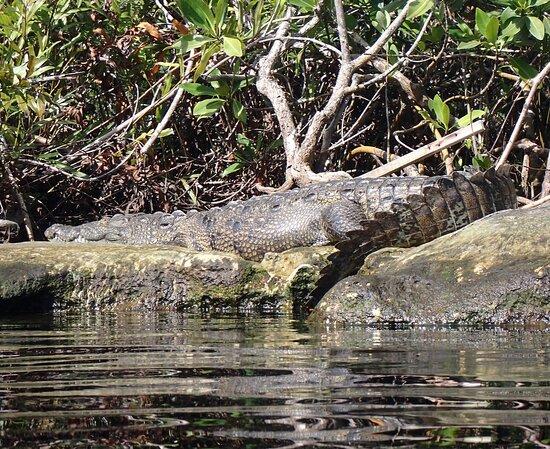 3 plongées dans le cénote - Casa and Dos Ojos : Casa Cenote