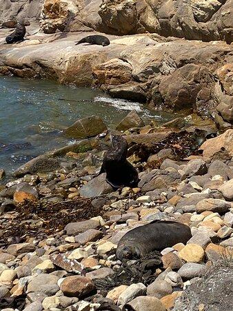 Palmerston Photo