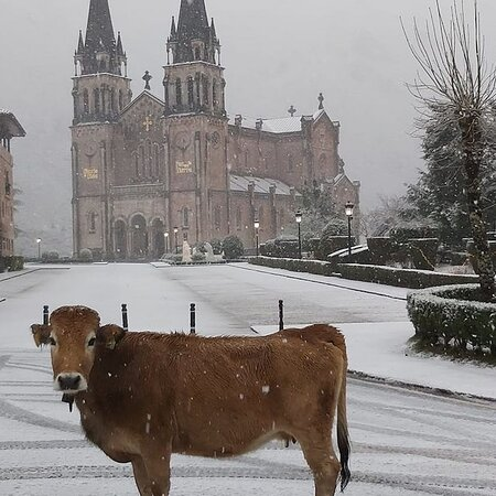 Clueless🐂 by the temporary ❄️ and cold snow that whips the Iberian Peninsula, the cow🐐 is placed in the sanctuary🙏 of Covadonga