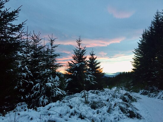 """Aberdeenshire, UK: Durris Woods Forest Trail. """"Take me deep into the wintry woods where hope glitters freshly worn."""" -Angie Weiland-Crosby"""