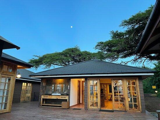 Ngorongoro Lions paw