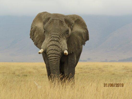 Sopai Safaris