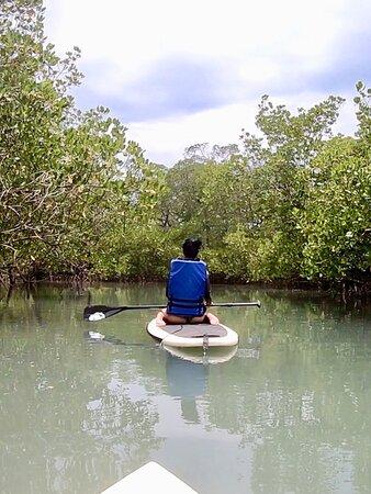 Stand Up Paddle no mangue do Rio Oritibe 🏝🏄🏽♀️ #passeiosguiados #passeiospersonalizados  . O encontro do mar e do mangue no Rio Oritibe se estabelece de uma forma tão plena e harmônica, transformando as paisagens em belas fotos paradisíacas. 📸👌 . Os canais do rio/mangue, passando por dentro das suas florestas são silenciosas, mas extremamente cheias de vida. Eles possuem uma gigantesca biodiversidade de crustáceos, peixes, aves, etc. 🦀🐟🦜🐍🌳