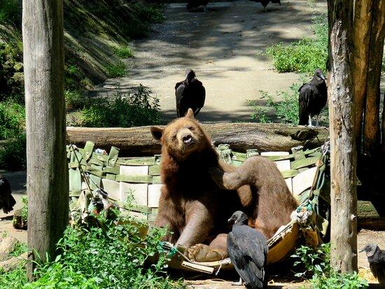 Trailside Museum & Zoo