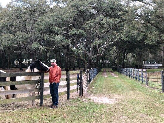 Gypsy Gold Horse Farm Tour with Entry Ticket Φωτογραφία