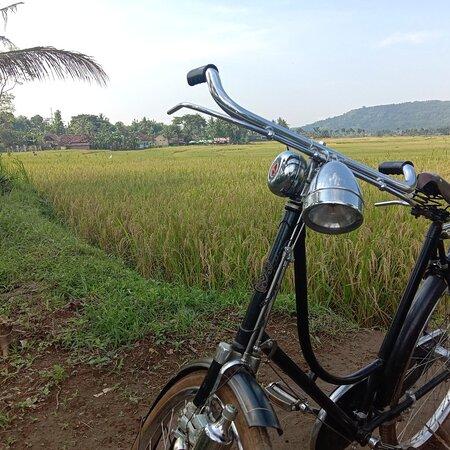 Pronosutan view is a huge panoramic  ricefield area in Kulonprogo, Yogyakarta.