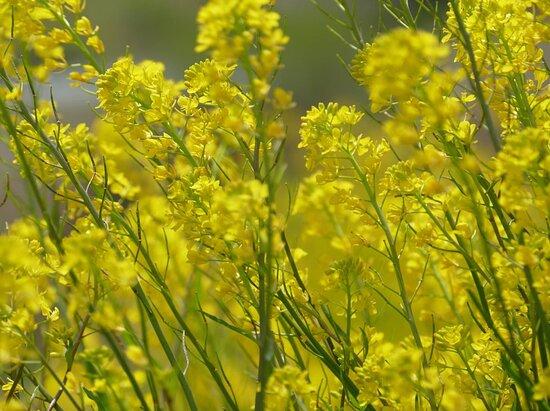 Sapporo, Nhật Bản: Come spring !  (1)