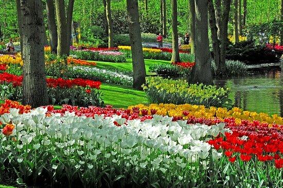 Keukenhof Gardens with Transfer from...