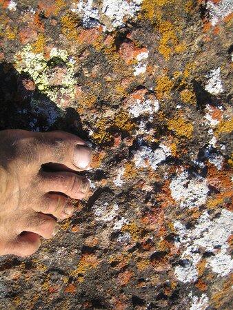 Lichen, El Modena Open Space, Orange, CA