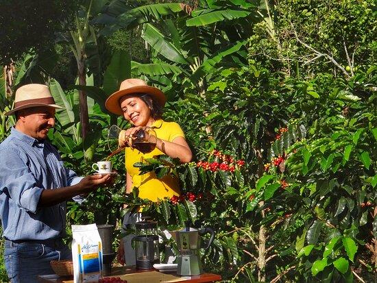 La Union Coffee Farm - Coffee & Fruits Tours