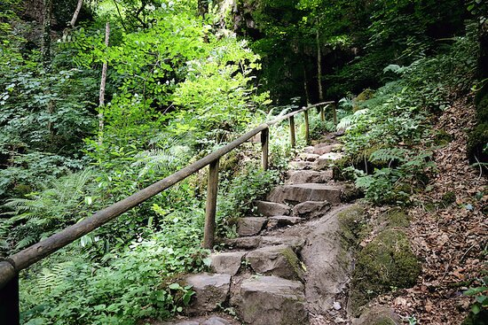 Christow, UK: The 90 Victorian steps lead you through ancient woodland and rocky outcrops to the Fern Garden above.