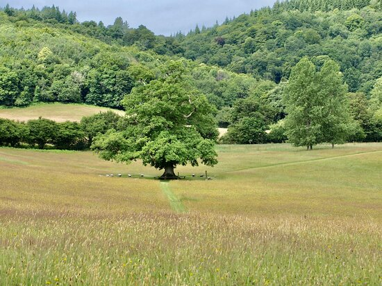 The Poetry Oak, on the edge of the lower lakes, perfect for picnics and reflection.