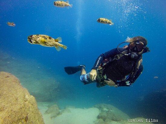 Our faithful dive buddies the puffer fish ... #krakendivers #scubadivingcabo #divecabo #scubacabo #cabosanlucas #cabotours #privatetours #tours #bajatours #privateinstructor #privateguide #scuba #scubadiving #diveexpeditions #divetours #diving #whattodoincabo #diveexpeditons #cabopulmo #marinepark #ecofours #travel #oceanexpeditions #underwaterphotographyexpeditions #cabosanlucas #marlinmigration #whalewatching #whaleshark #sealions #underwater #marinelife #scubalovers