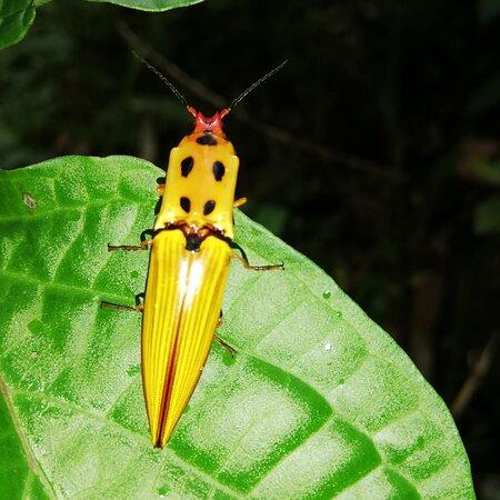 gran variedad de insectos que susuran su canto en interior del bosque su dulce melodia agrupa una orquesta filarmonica.